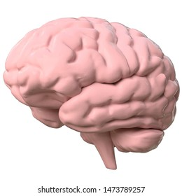 3D rendering illustration of a stylized human brain
