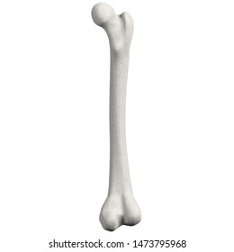 3D rendering illustration of a stylized human femur anatomy
