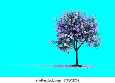 3D rendering of JACARANDA MIMOSIFOLIA tree isolated on cyan background
