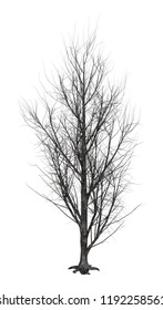 3D rendering of a leafless poplar tree isolated on white background