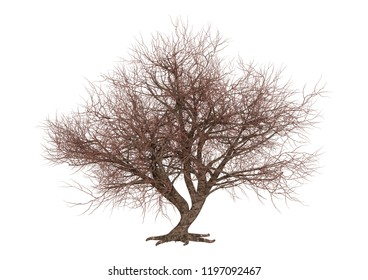 3D rendering of a leafless sakura tree isolated on white background