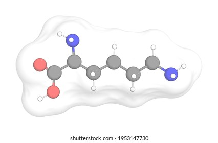 3D rendering of L-Lysine with white transparent surface over a white opaque background. Also called lysine and h-lys-oh.