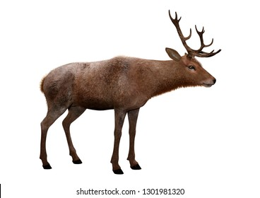 3D rendering of a male deer isolated on white background