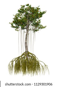 3D rendering of a mangrove tree isolated on white background