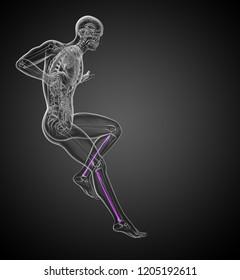 3d rendering medical 3d illustration of the fibula bone - side view