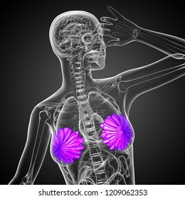 3d rendering medical illustration of the human breast - front view