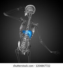 3d rendering medical illustration of the liver - back view