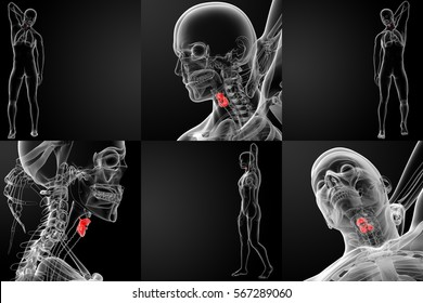 3d rendering medical illustration of the male red larynx x-ray collection