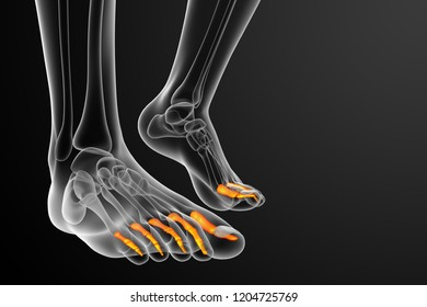 3d rendering medical illustration of the phalanges foot - front view