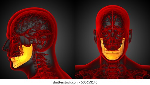 3d rendering medical illustration of the yellow jaw bone x-ray