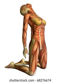 3D rendering muscle woman on her knees head back