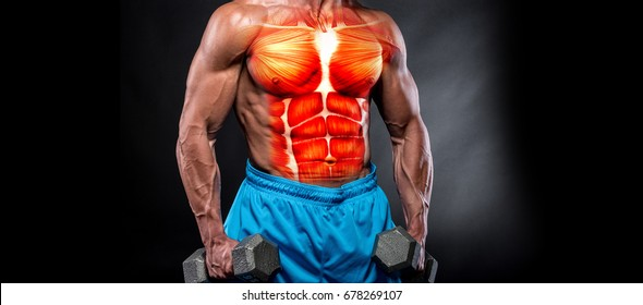 3D rendering muscles. muscular guy working out with weights and showing naked upper body.3D illustration muscles