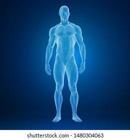 3d rendering of an muscular human body