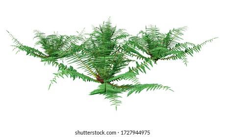 3D rendering of a Neoblechnum fern plant isolated on white background
