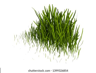 3D rendering of a patch of grass isolated on white background