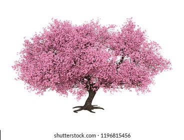 3D rendering of a pink blooming sakura tree isolated on white background