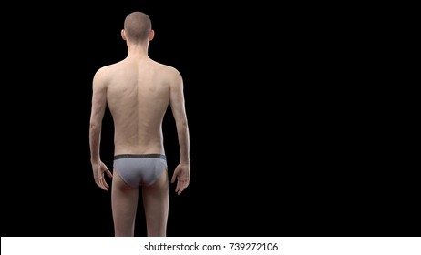 3D Rendering : Portrait of standing male ectomorph (skinny) body type, Back view