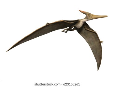3D rendering of a prehistoric reptile Pteranodon isolated on white background