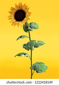 3D rendering of a pretty sunflower on an orange colored background.