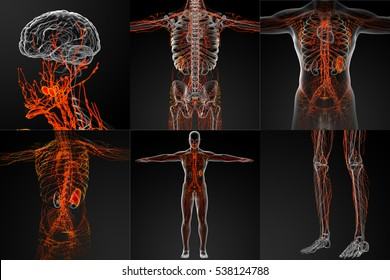 3d rendering of the red lymphatic system x-ray collection