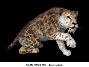3D rendering of a sabertooth tiger isolated on black background