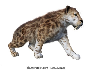 3D rendering of a sabertooth tiger on white