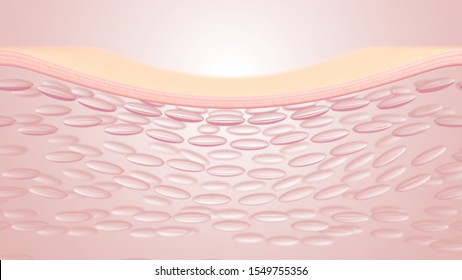3D rendering The skin structure layer Microstructure