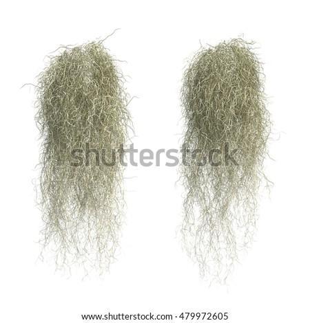 3 d rendering spanish moss stock illustration 479972605 shutterstock