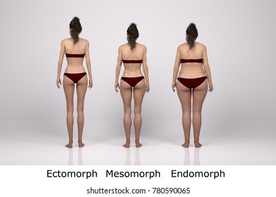 3D Rendering : standing female body type illustration : ectomorph (skinny type), mesomorph (muscular type), endomorph(heavy weight type) , Back view