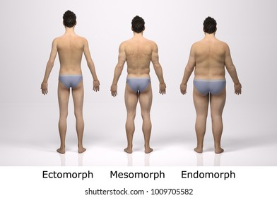 3D Rendering : standing male body type : ectomorph (skinny type), mesomorph (muscular type), endomorph(heavy weight type), Back View