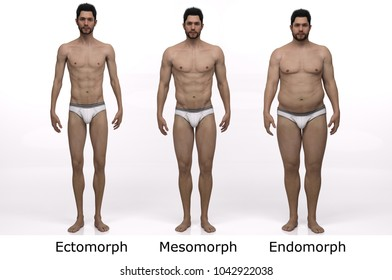 3D Rendering : standing male body type : ectomorph (skinny type), mesomorph (muscular type), endomorph(heavy weight type) : Front View