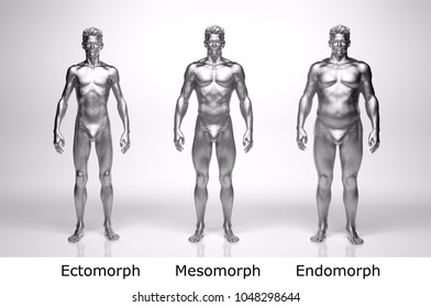 3D Rendering : standing male body type : ectomorph (skinny type), mesomorph (muscular type), endomorph(heavy weight type), with silver texture