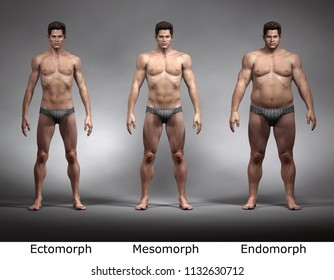 3D Rendering : standing male body type : ectomorph (skinny type), mesomorph (muscular type), endomorph (heavy weight type), Front View