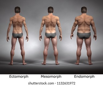 3D Rendering : standing male body type : ectomorph (skinny type), mesomorph (muscular type), endomorph (heavy weight type) : Back View