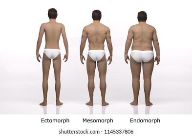 3D Rendering : standing male body type illustration : ectomorph (skinny type), mesomorph (muscular type), endomorph (heavy weight type) ,Back View