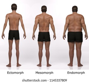 3D Rendering : standing male body type illustration : ectomorph (skinny type), mesomorph (muscular type), endomorph (heavy weight type) ,Back View