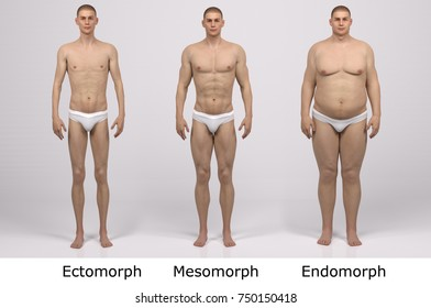 3D Rendering : standing male body type : ectomorph (skinny type), mesomorph (muscular type), endomorph(heavy weight type) ,Front View