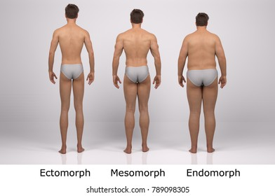 3D Rendering : standing male body type : ectomorph (skinny type), mesomorph (muscular type), endomorph(heavy weight type)