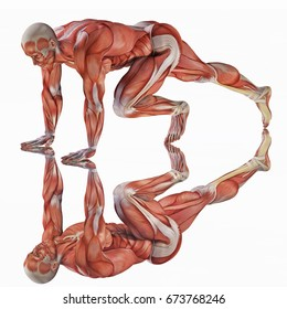 3d rendering strong anatomical muscles man in start running line position isolated on white and on a mirror floor