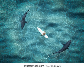 3d rendering. surfer surrounded from two sharks. top view
