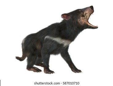3D rendering of a tasmanian devil isolated on white background