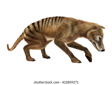 3D rendering of a thylacine isolated on white background