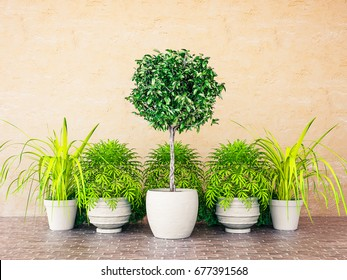 3D Rendering Topiary Plant in Pot Against Wall