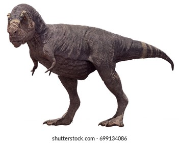 3D rendering of Tyrannosaurus Rex isolated on a white background.