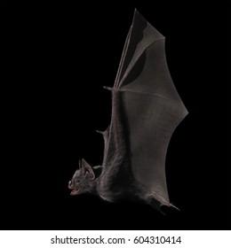 3D Rendering of Vampire Bat