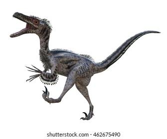 3D rendering of Velociraptor.