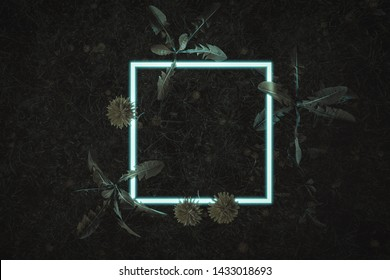 3d rendering of white square neon light with dandelion plants. Flat lay of minimal nature style concept