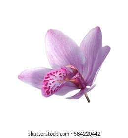 3D rendering of a wild orchid flower isolated on white background