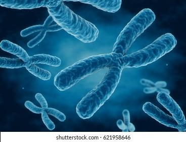 3D rendering X chromosomes