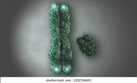 3D Rendering X and Y Chromosome with Telomeres